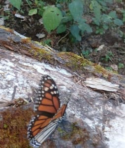 Butterflies sweet home