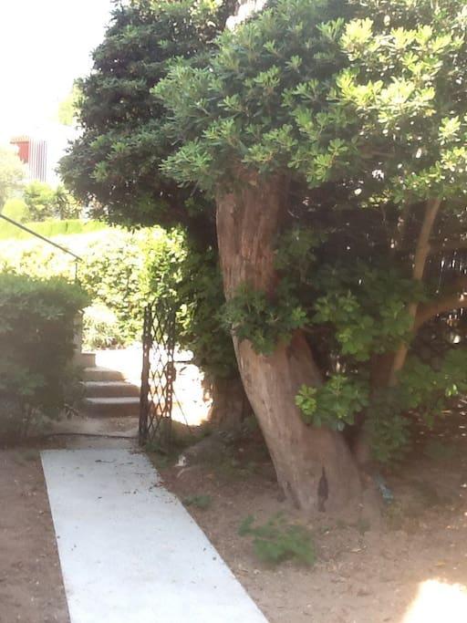 Jardin avec chemin menant à l'appartement