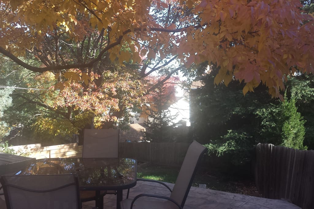 Shaded quiet back yard