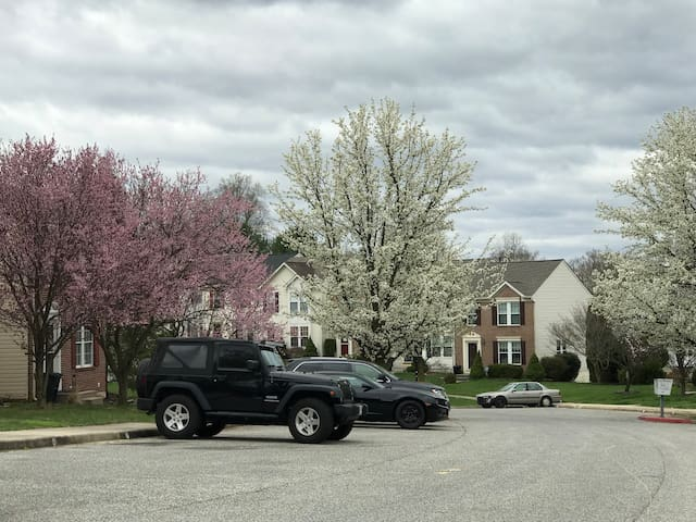 Neighborhood in the Springtime.