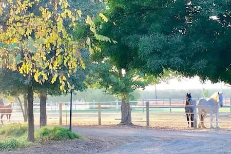 Horseshoe Bar Ranch , a quiet country get-away!