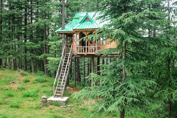 Into the Wild   Tree House   Deodar Forest  Serene