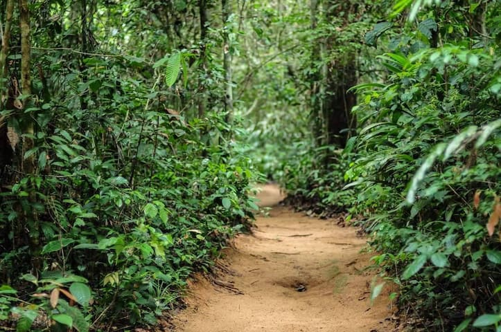 forest paths...