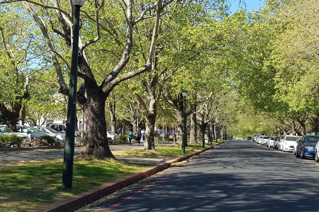 The Streets of Stellenbosch