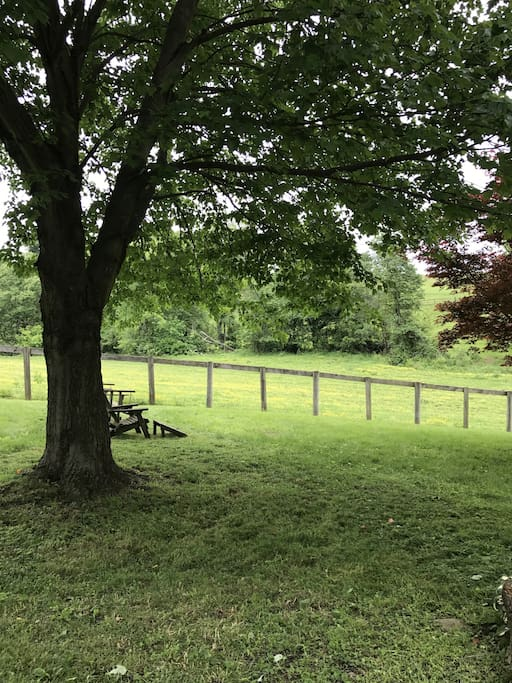 relaxing back yard