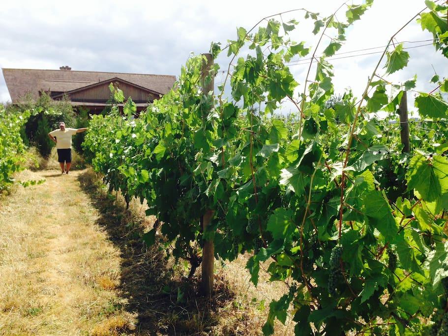 Small private vineyard