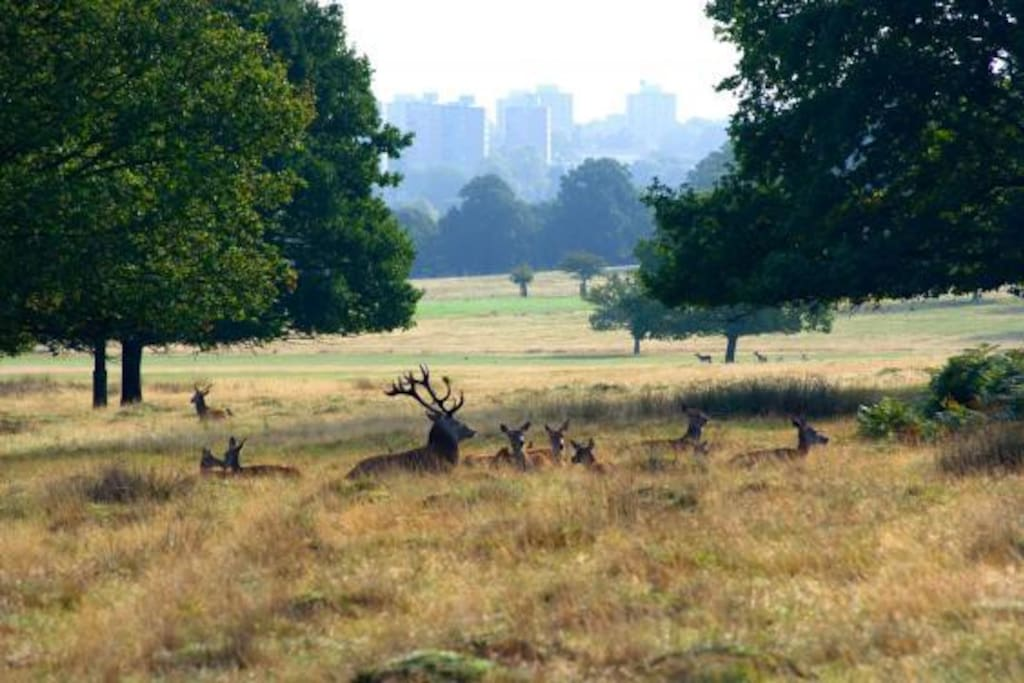Richmond part is less then 5 minutes walk, a great place to cycle around