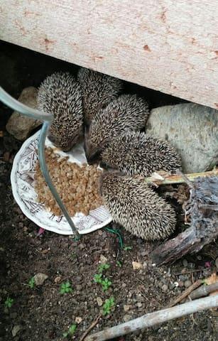 Welcomed garden guests