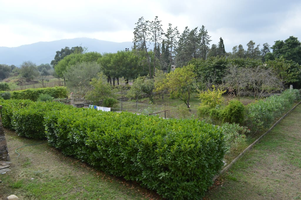 Arbres fruitiers/potager
