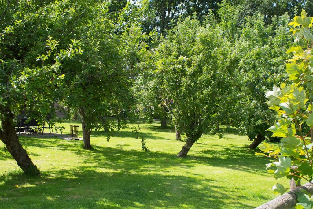 View Through the Orchard