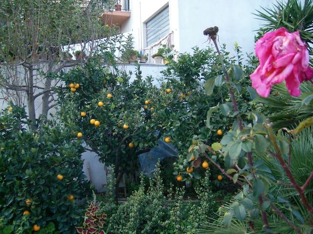 """Bilocale""""Hibiscus"""" vicino la Riserva dello Zingaro - Buseto Palizzolo - Appartement"""
