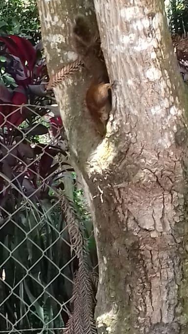 Animais exóticos na natureza