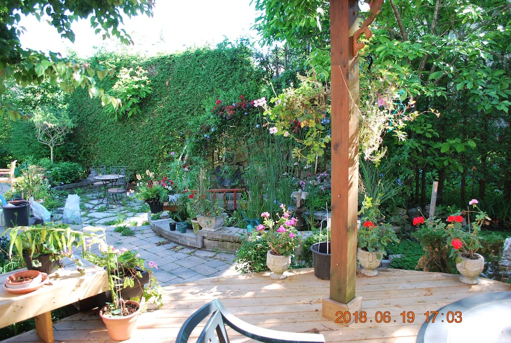 Back patio