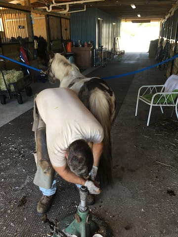 Our farrier hard at work...