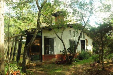 El ZENtro - An Amazing Place in the Forest - San Cristóbal de las Casas