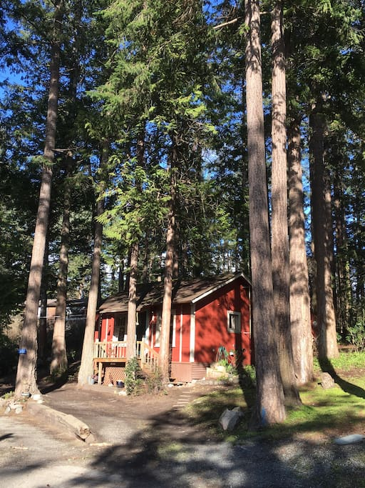 Kahlo Cottage.  A tiny cottage surrounded by tall pines with a lovely water view.