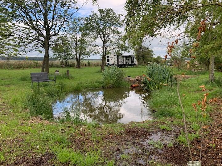 Meagill farm, The willow