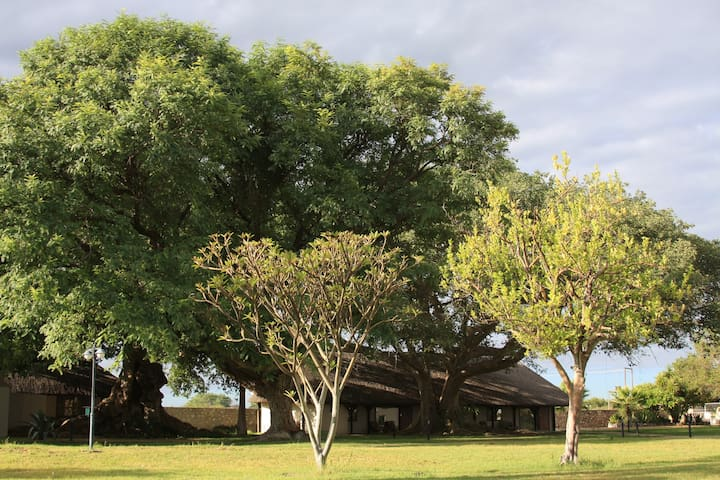Optimum luxury & Relaxation 1 - Tsumeb - Penzion (B&B)