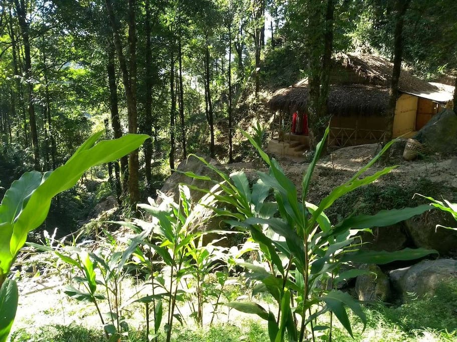View of our earth house from amidst the cardamom fields.