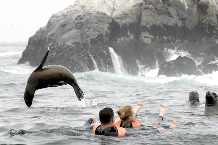 sea lions are overall, jumping and play