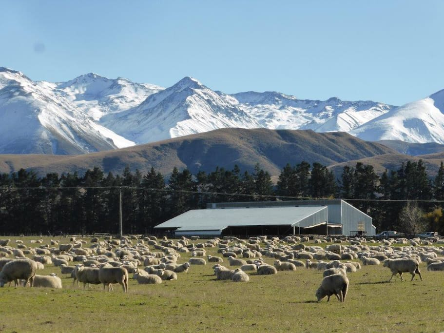 The woolshed with the Two Thumb Mountain range in the background