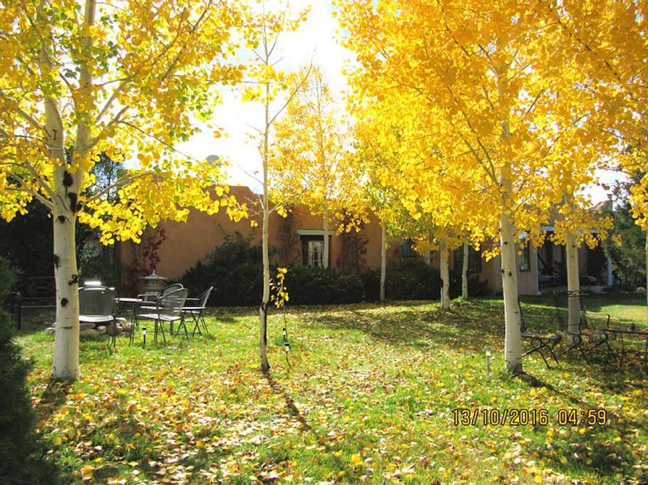 Aspen Grove front yard mid October