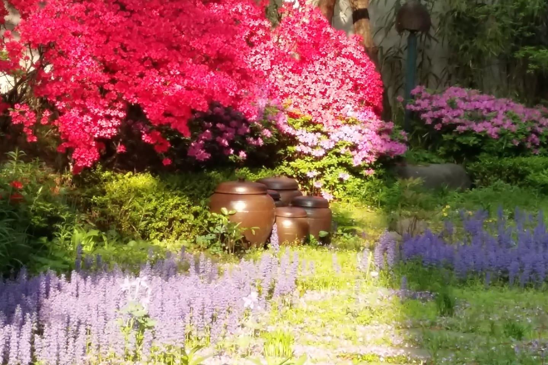 연산홍으로붉게 물든 아름다운 정원입니다