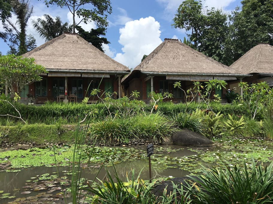 Totally 6 rice terrace suites available