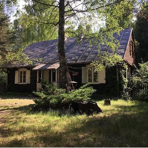 Dobry Dom w środku lasu II