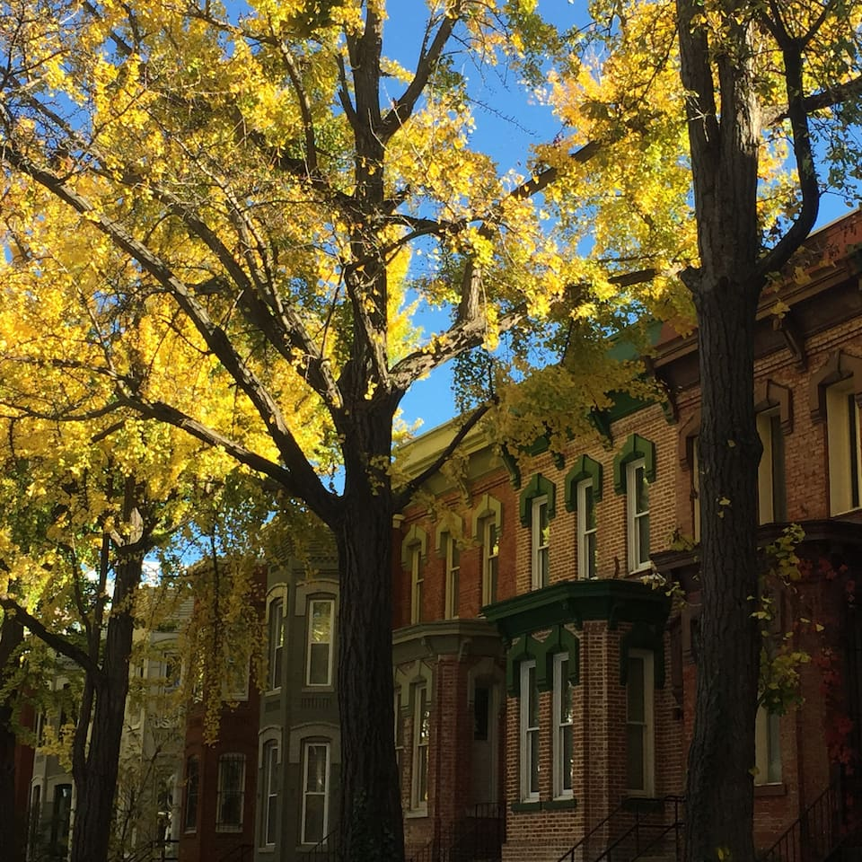 A fall view of iconic DC streets.