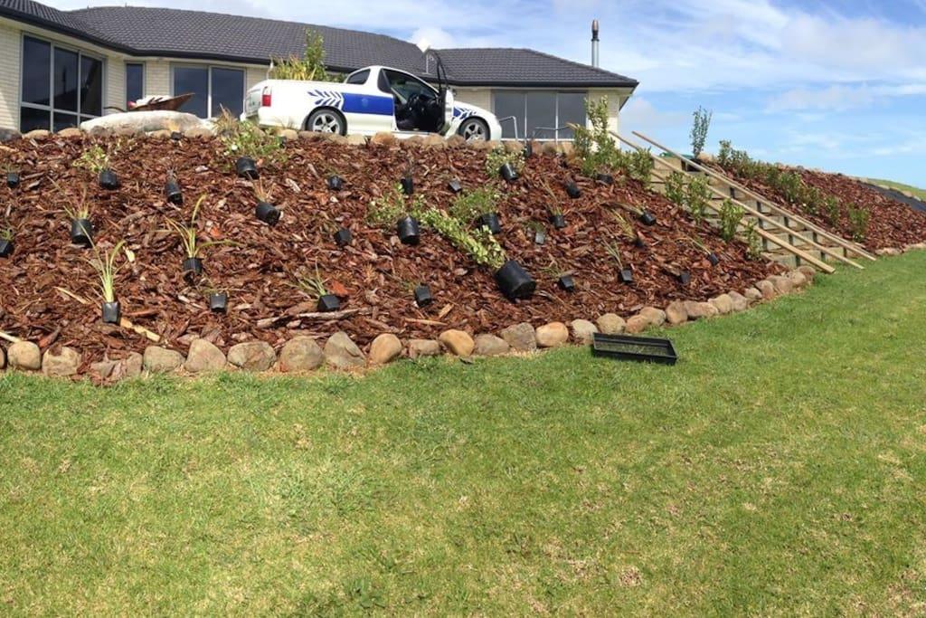 Planting Mid 2014