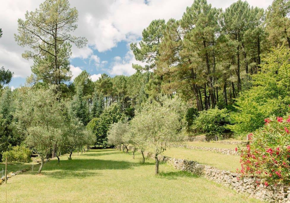 Terrasse des oliviers