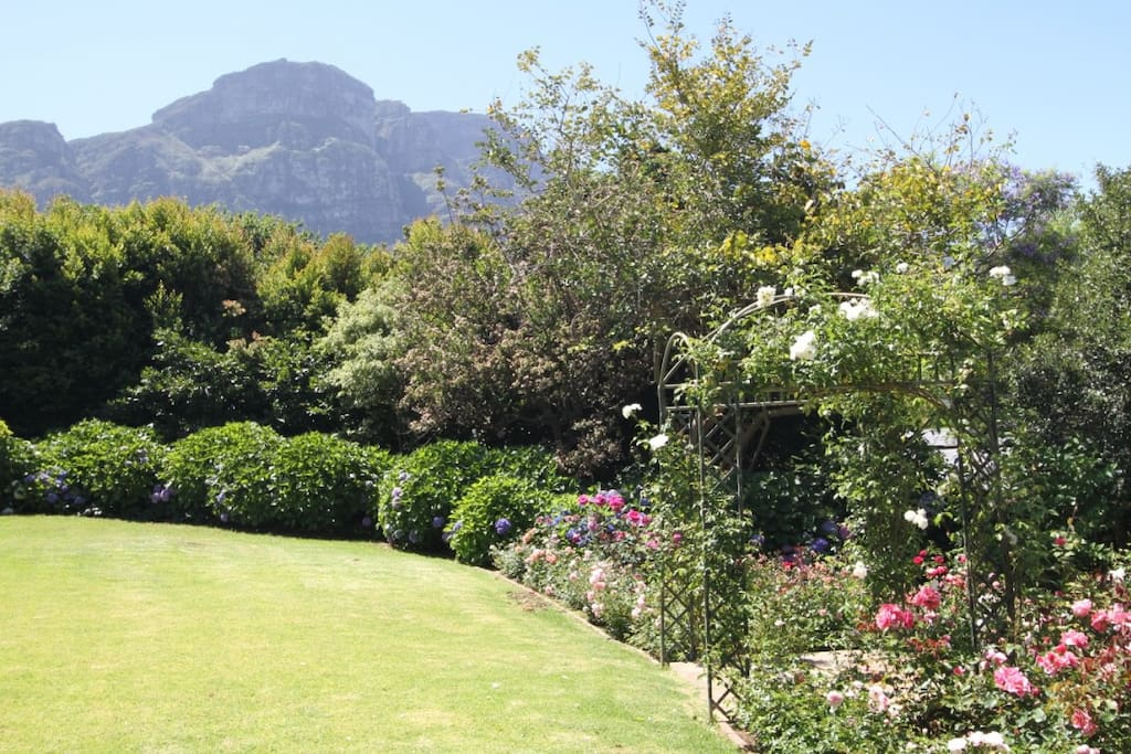 The slopes of Table Mountain as viewed from our garden