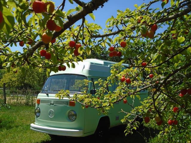 Super van aménagé dans un camping écologique