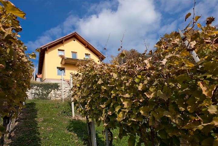 Vineyard cottage Ucman - Otočec