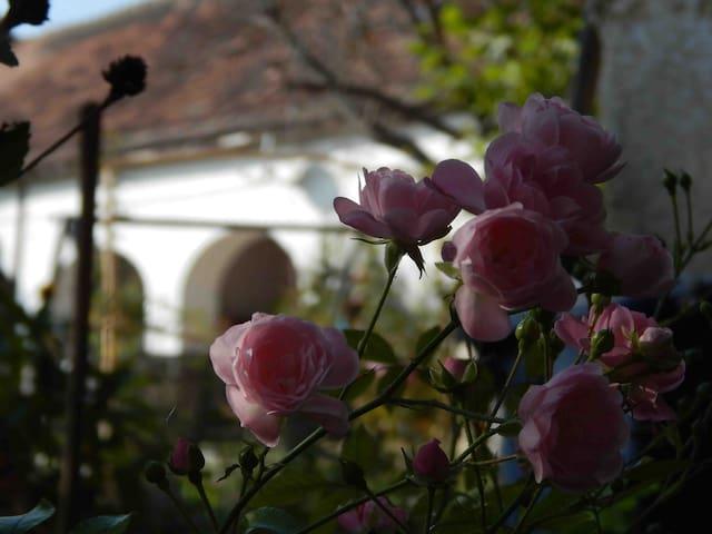 Lőke Kúria Vendégház - Rózsa szoba