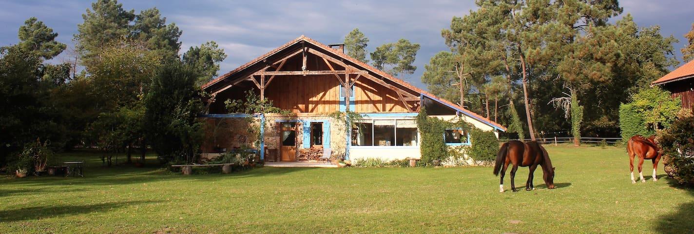 Maison landaise, gîte équestre au milieu des bois