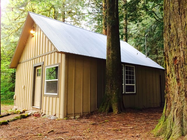 """Tin Roof Cabin"" in the Woods"