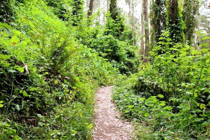 Beautiful eucalpytus forest