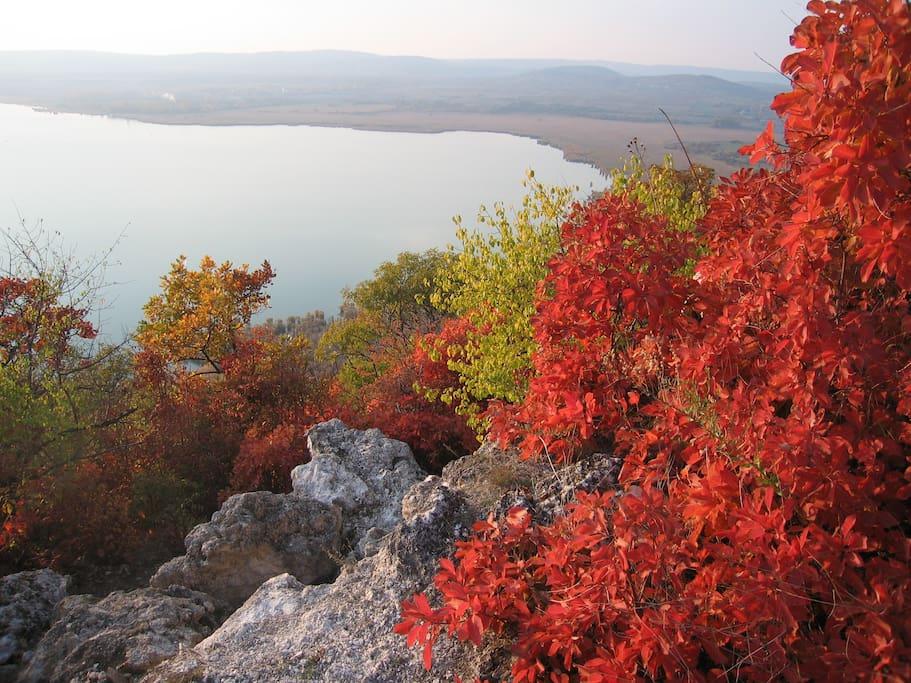 Tihany autumn, Sajkod glowing red smoke plant along Lóczy trail