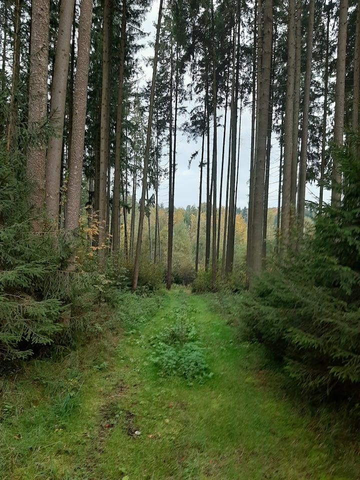 Auszeit in den westlichen Wäldern Schwaben