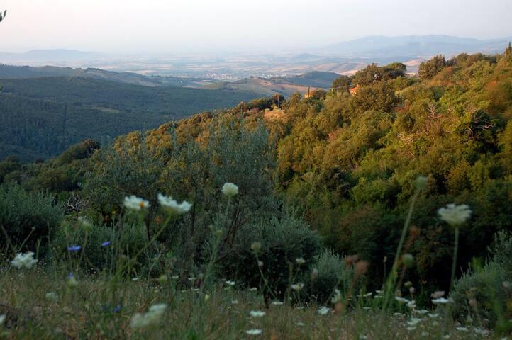 Salvia: collina vista mare giardino - Tatti - Huis