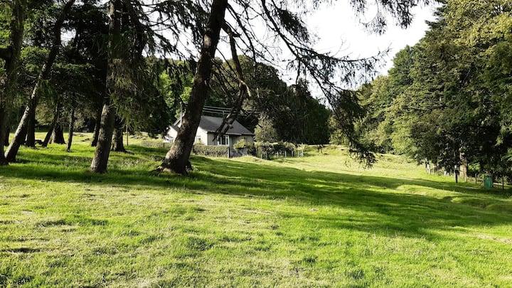 Cottage on edge of woodland. Auchinellan estate.