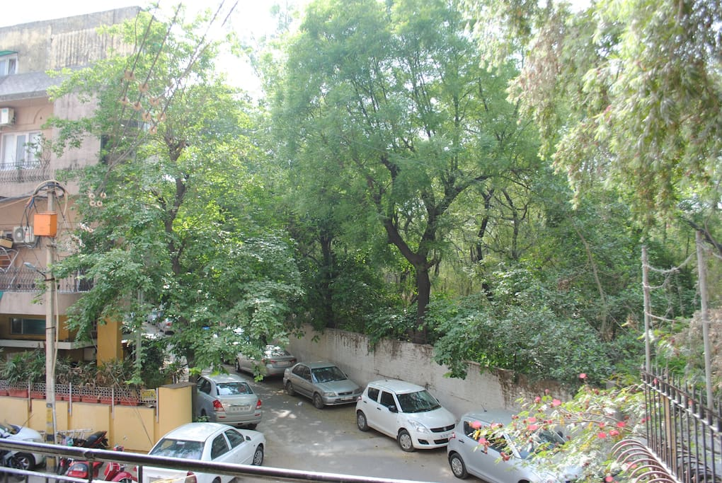 Down the street, with the forest on one side