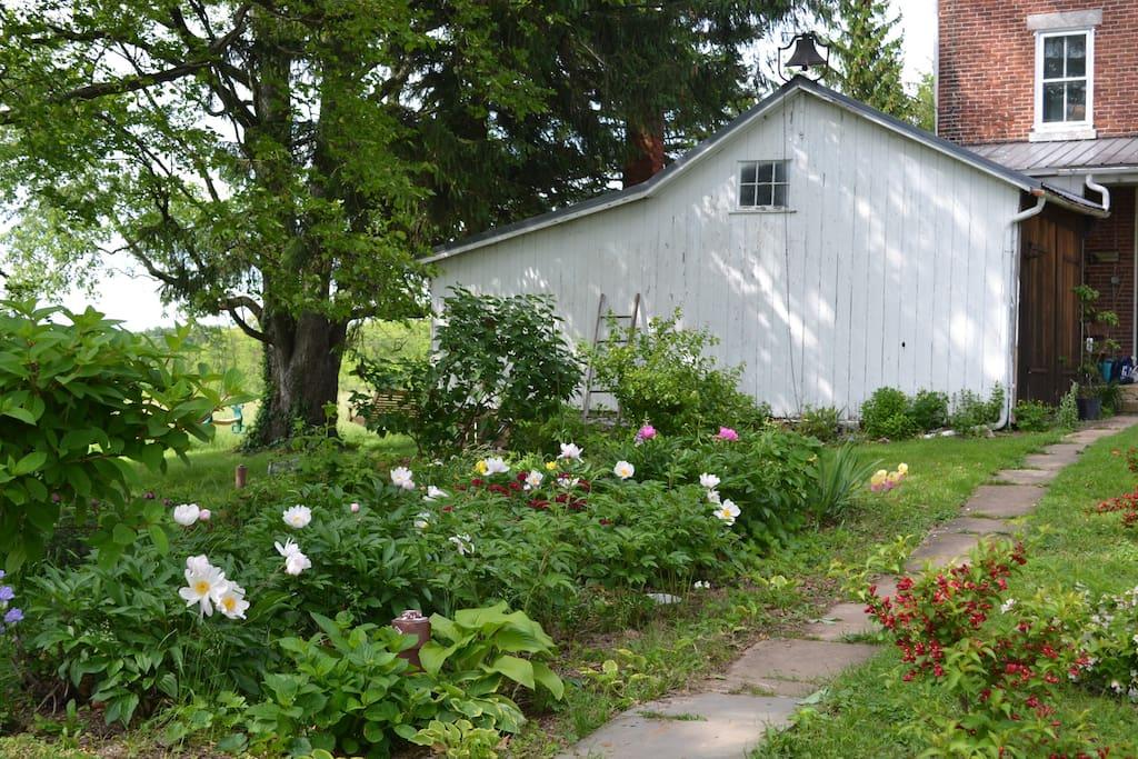 Back garden in its late spring splendor