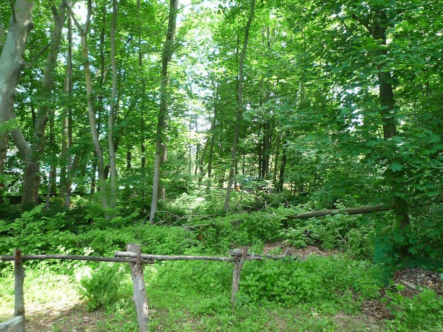 Adjacent to wooded park
