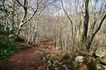 Local beech woods in winter.  It is good here all year round!