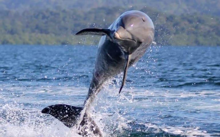 Dolphin Bay Hideaway- Garden Room