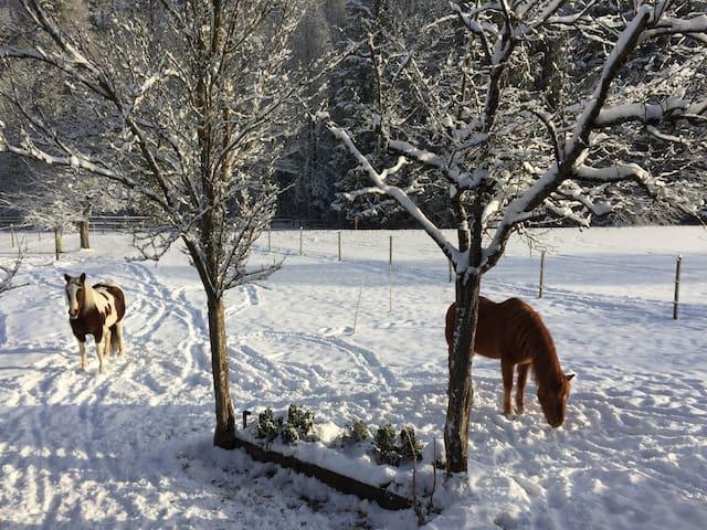 Pferdeweide beim Haus, Lucky und Shawnee