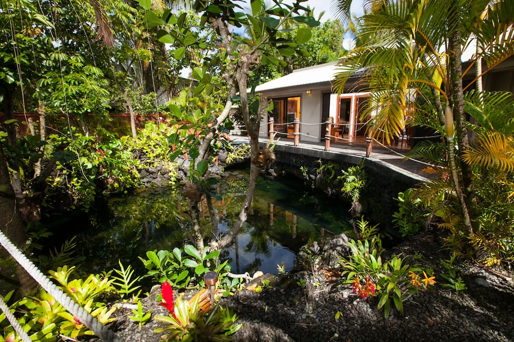 Warm Ocean-fed Pond surrounds our home, outside dining area/barbecue and sunning area